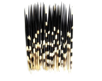 10 African Porcupine Quills Striped 9-12 Inch African Art
