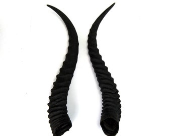 MATCHED PAIR 12 Inch Male Springbok Horns from Africa Maleficent Headdress