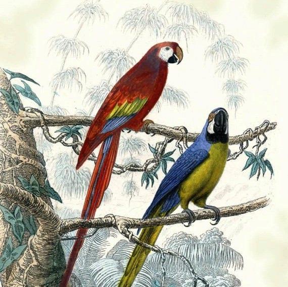 719 sehr schöne Papageien 1 Handtuch Papier 33 X 33 X 4 Muster | Etsy