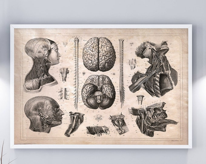 Nervous System Vintage Anatomy Drawing Wall Decor Poster