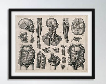 Overview of Human Anatomy  Vintage Anatomy Drawing Wall Decor Poster
