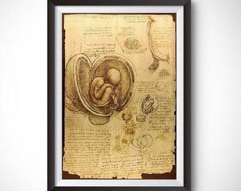 Studies of the Fetus in the Womb by Leonardo Da Vinci Wall Art