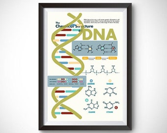 The Chemical Structure of DNA Poster Wall Art