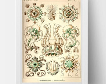 Medusa Drawing by Ernst Haeckel Poster