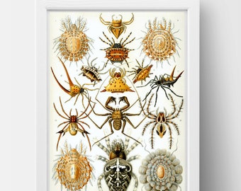 Spider Drawing by Ernst Haeckel Poster