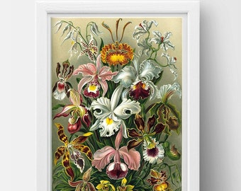 Orchidae Drawing (1899) by Ernst Haeckel Poster