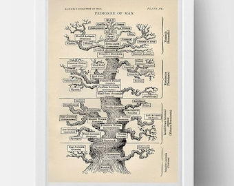 The Phylogenetic Tree: Haeckel's tree Poster