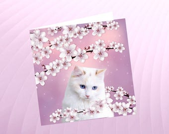 Cat, cat greeting card, cat art: cherry blossoms