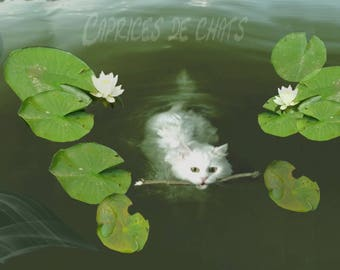 The cat and lily pads