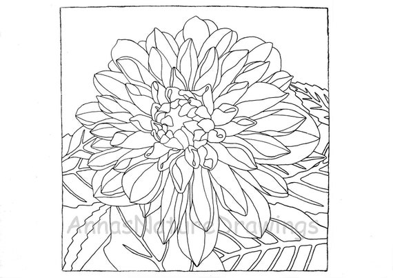Dahlia Coloring Page Printable Adult Coloring Page Digital