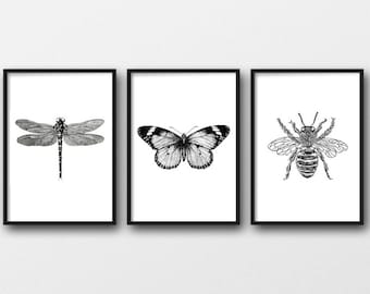 Set of 3 Insect Prints | Bee | Dragonfly | Butterfly | taxidermy | wall art | bugs | black bugs | home decor | home prints | animal prints
