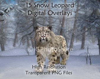 Big Fantasy Cat PSD Clipart Digital Backdrop Cat in the Woods Digital Background JPG Kid in the Woods Fantastic Overlays Photoshop