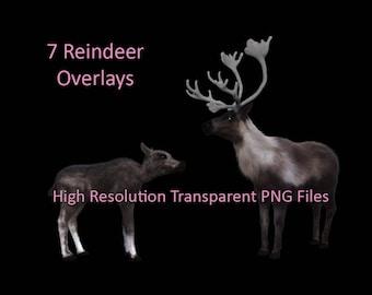 7 Reindeer Overlays, Animal Overlays, Transparent PNG Reindeer, Deer Overlays, Photoshop Overlays, Digital Reindeer Clipart, PNG Overlays