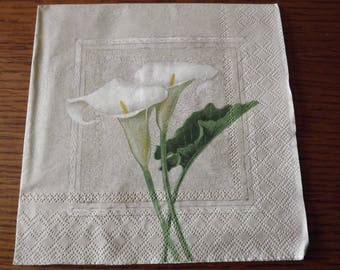towel flower of arum on gray background