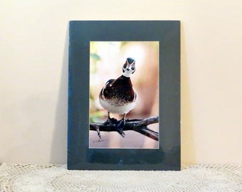 Mallard Duck Print Matted Color Wildlife Photography Gerry Lamarre Signed Duck Print Bird Shrink Wrapped Green Mat Ready to Frame