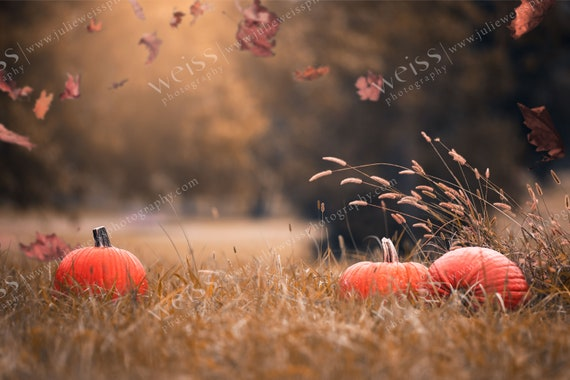 Fall Autumn Halloween Background Pumpkins Photography Digital Background