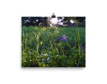 Vibrant Purple Wildflower Meadow - Nature Photography Poster - Multiple Sizes