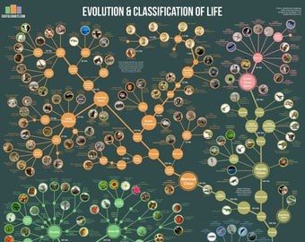 Evolution and Classification of Life Poster