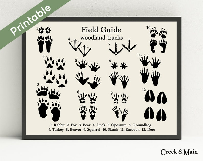 graphic about Printable Animal Tracks identified as Woodland Nursery Artwork, Animal Tunes Poster, Nursery Decor, Woodland Indicator, Animal Footprints Wall Artwork, Woodland Little one Shower, Forest Pets
