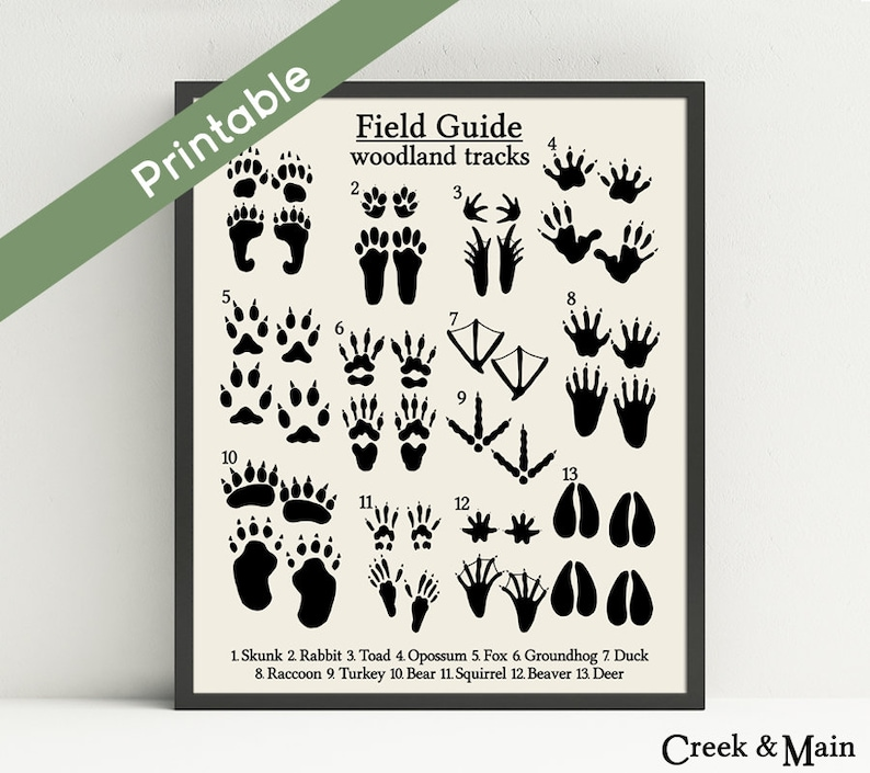 image about Printable Animal Tracks named Woodland Animal Songs, Printable Woodland Nursery Artwork, Business Lead Animal Songs, Animal Footprints, Rustic Artwork, Woodland Decor
