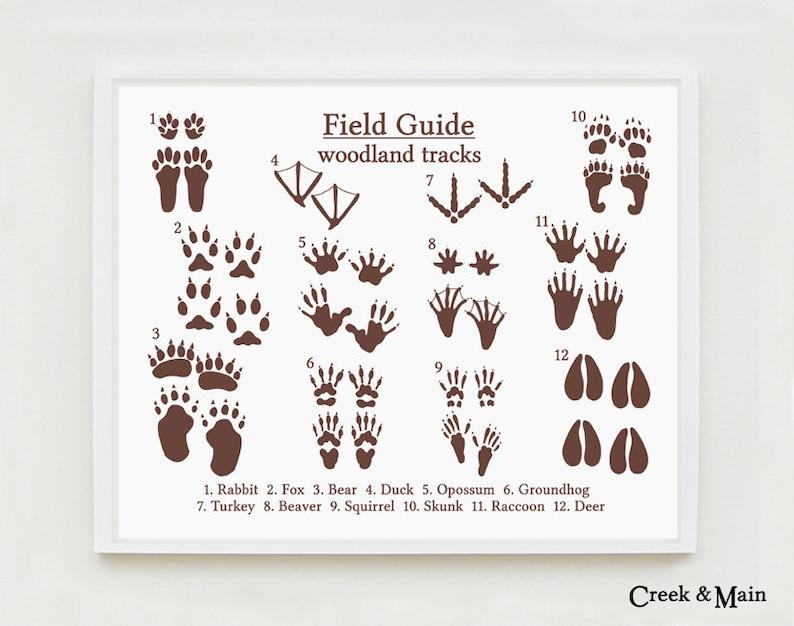 Animal Tracks Woodland Nursery Decor Field Guide Poster Etsy