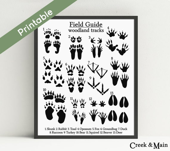 image about Printable Animal Tracks known as Animal Music Print, Printable Woodland Nursery Artwork, Sector Lead Animal Songs, Woodland Animal Footprints, Black, Rustic Artwork, Nursery Decor
