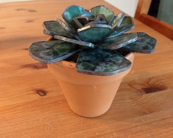 Potted Stained Glass Succulent