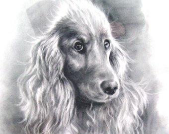 Pet portrait, Custom Pet Portrait, Dog Portrait, Dog drawing, Animal Portrait,  Drawn from photo,  Dog Pencil sketch, pet memorial, pet loss
