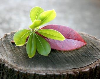 "Digital Download Green Leaves Red Leaf on a Tree Stump 36"" x 24"" 300 dpi"