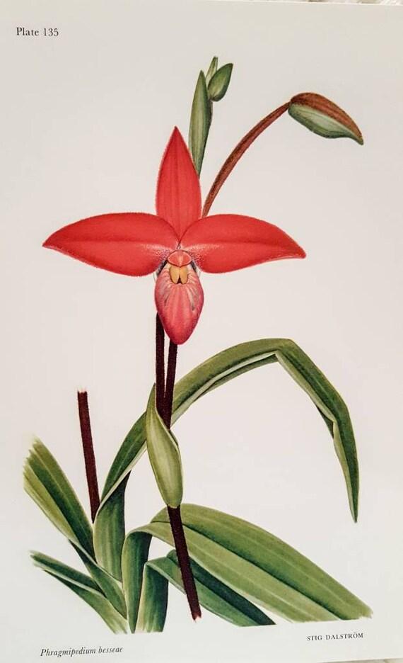 Beau Andes Orchid Botanical Print Original 1989 Print Published | Etsy