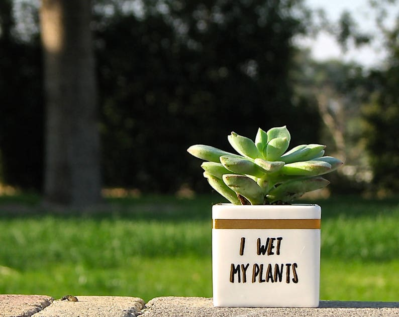 I Wet My Plants Adorable Succulent Pot Personalized Gifts
