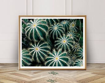 Cactus Print, Southwest Wall Art, Botanical Print, Digital Download, Photo, Desert Print, Modern Decor, Bohemian Photography