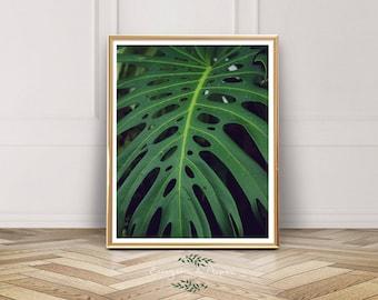 Palm Leaf, Photography, Tropical, Instant Download, Palm Leaf, Leaf Art, Tropical Print, Green, Seattle