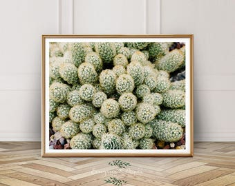 Cactus Print, Southwest Decor, Digital Download, Photo, Desert Print, Botanical Print, Modern Decor, Wall Art, Bohemian,