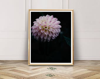 Dark Floral Photography, Flower, Botanical Poster, Ellie Cashman, Dahlia, Photo, Instant Download, Pink, Floral