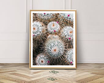 Cactus Print, Southwest Decor, Digital Download, Modern Art, Photography, Wall Art, Desert Print, Bohemian Photo
