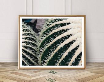 Cactus Print, Southwest Decor, Digital Download, Modern Photo, Modern Art, Desert Print, Wall Art, Bohemian Photography