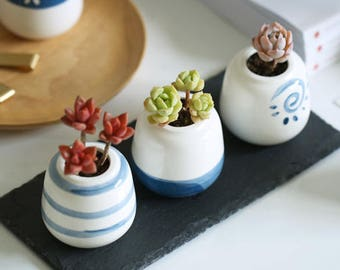 Set of 3 - Ceramic Planter Set for Succulent, Cactus, Air Plants, Succulent Planter, Mini Planter, Ceramic Planter, Ceramic Pot, Mini Pot