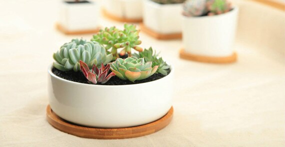 Simple Planter Succulent Planter Terrarium Miniaturefairy Etsy