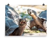 Happy Tortoise Poster | Cincinnati Zoo | Ohio