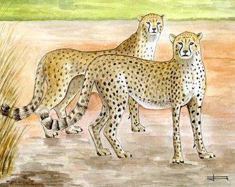 Reproduction of my original watercolor: two cheetahs.