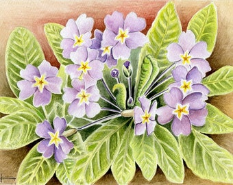 Unique and original WATERCOLOR: the magic of spring, Primroses.