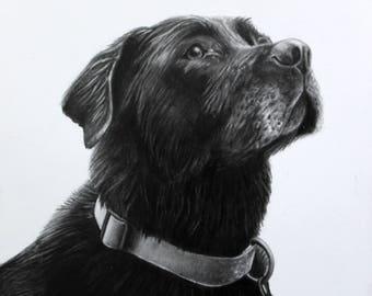 Custom Pet Portrait Drawing, Dog Portrait, Cat Portrait, Animal Drawing, Pet Loss, Memorial Drawing, Pet Lover, Dog Drawing