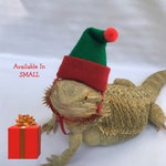 Elf Hat for Bearded Dragon or other Reptile or pet