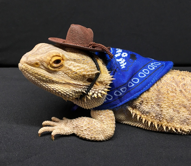 66369668a58 Cowboy   Cowgirl Outfit for Bearded Dragon Brown