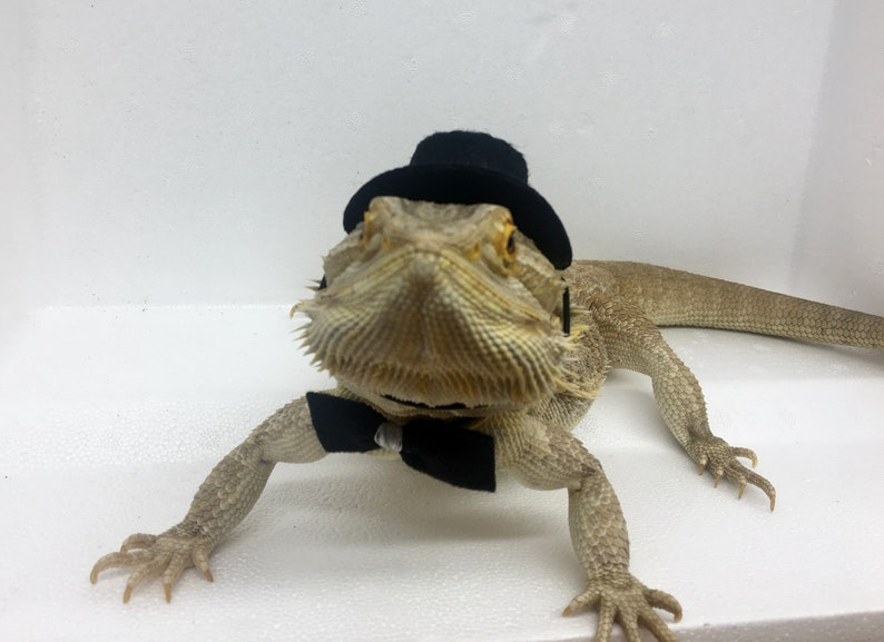 b381af41802 Bearded Dragon Hat and Bow Tie for adult bearded dragon