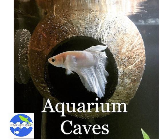 Aquarium Coconut Cave Pleco Cave Cichlid Cave Betta Fish Etsy
