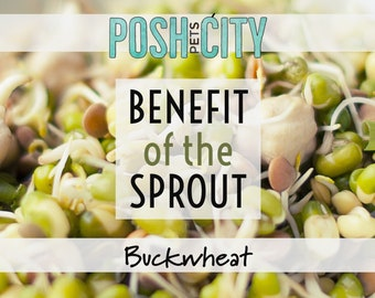 Benefit of the Sprout - Organic Buckwheat for Birds - 1.5 oz packet Sprouting Seed