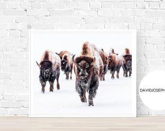 Bison Print, American Buffalo Print, Bison Wall Art, Bison Poster, Snow Animal, Animal Print, Buffalo Wall Art, Digital Download