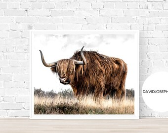 Highland Cow Print, Farm Animal Wall Art, Nursery Decor, Cattle Photography, Animal Photography, Digital Download, Scottish Cow Print
